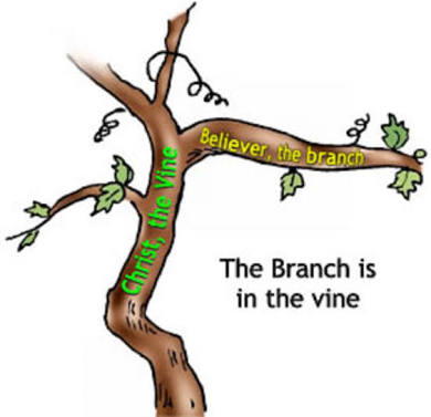 Image result for image of a vine and branches